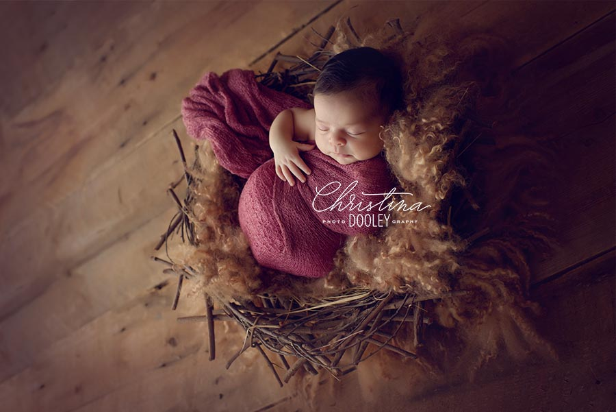 Photo of a baby in a nest
